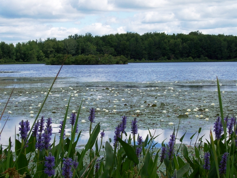 Cook Pond and Flowers
