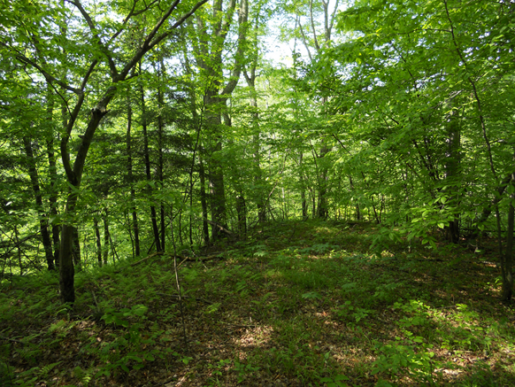 A hill in the forest near Greene, NY