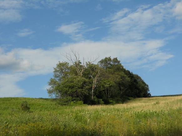 Trees in North Norwich, NY