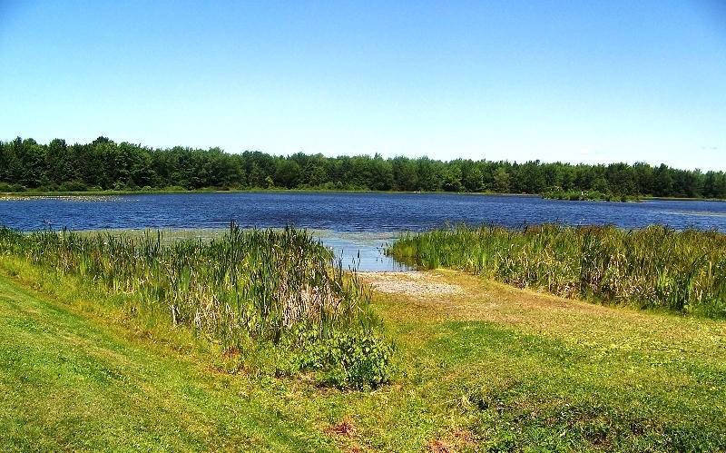 Cook Pond
